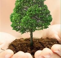 Пополняется лесной фонд