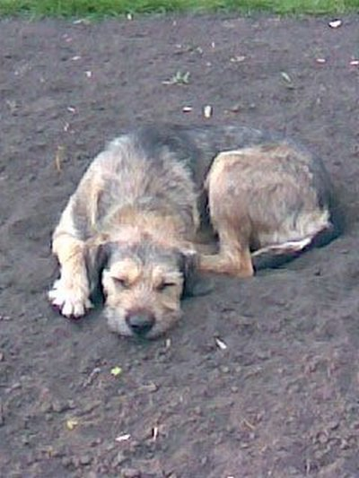 Собачья жизнь. И смерть